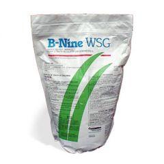 B-Nine WSG